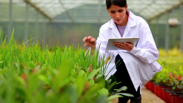 Assistant using tablet pc to check plants video
