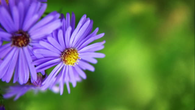 Aster video
