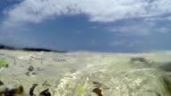 At surface of the sea - Zanzibar video