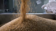 At the factory for sorting and packaging of cereals and grains. Worker pours into a special tank buckwheat, for further processing video