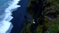 Atlantic puffins nesting in Dyrholaey, Iceland video