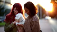 Attractive Young Women Embracing Little White Maltese Dog video