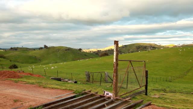 Aussie sheep farm video