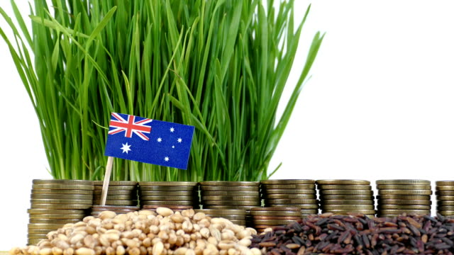 Australia flag waving with stack of money coins and piles of wheat video