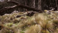 Australian Bush - Mt Macedon (HD) video