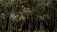 Australian Bush video