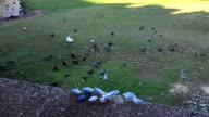 Australian Native Birds Group Eating video