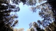 Australian Trees HD video