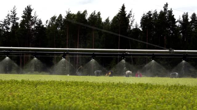 Automatic irrigation equipment video