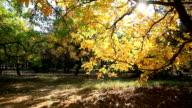 Autumn alley in sunlight video