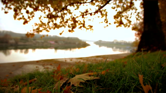 Autumn and river video