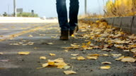 Autumn and road video