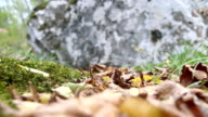 Autumn background, moss and stone video
