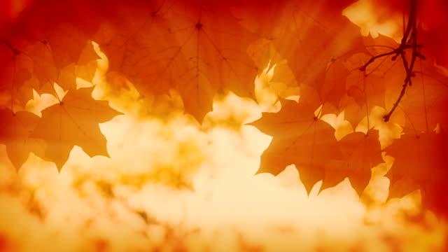 Autumn background. video
