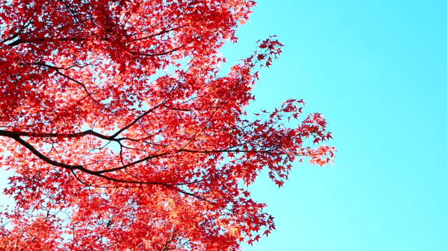 Autumn Background With Blue Sky video