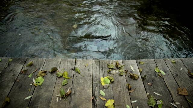 Autumn. Bridge video