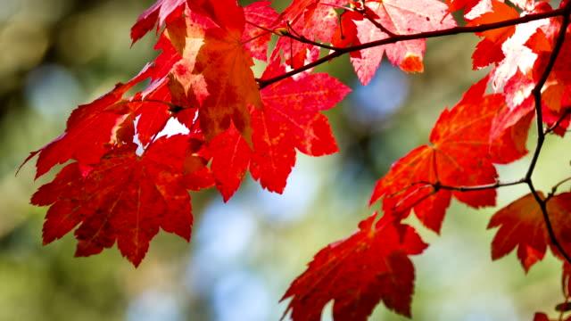 Autumn Color video