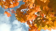 HD: Autumn colors video
