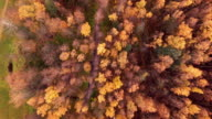 Autumn colors video