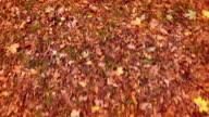 Autumn colors video
