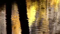 autumn colours reflected in the water video