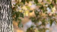 Autumn / Fall video