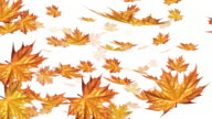Autumn falling leafs on white background video