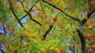 Autumn Foliage video