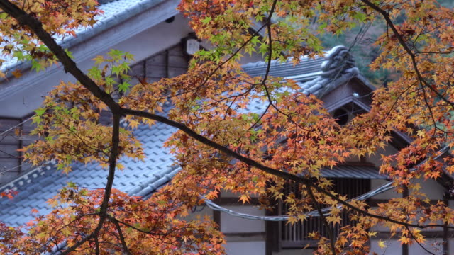 Autumn foliage with roof house background in Korankei, Aichi, Japan video