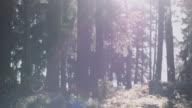 Autumn forest in sunlight video