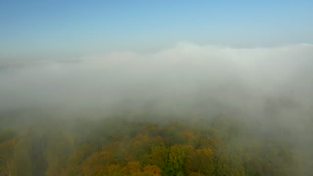 AERIAL Autumn Forest In The Fog video