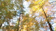 HD TIMELAPSE: Autumn forest video