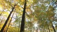 HD: Autumn forest video