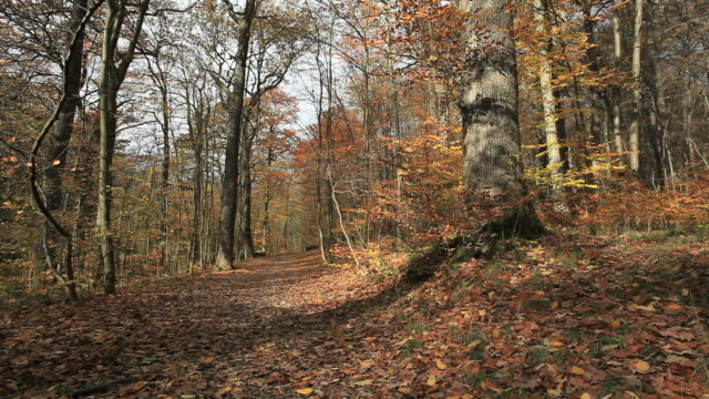 autumn forest video