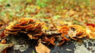 Autumn forest with mushrooms on a tree video
