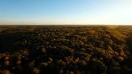 Autumn forest,aerial view video