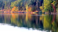 Autumn golden trees over the water video
