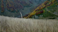 Autumn grass field in the mountains video