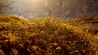 autumn grass in the mountains sunset video