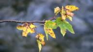 Autumn impression (HD, NTSC, PAL) video