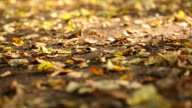 autumn in a park (dolly shot) video