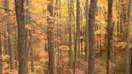 Autumn in the Appalachian Mountains video