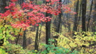 Autumn in the Appalachian Mountains video