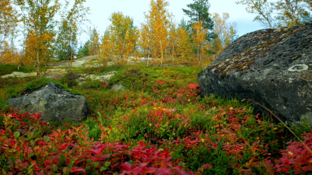 Autumn in the Arctic circle video