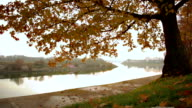 Autumn in the forest near the river. video