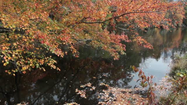 Autumn Lake video