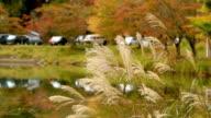 Autumn lake. video