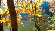 Autumn landscape in the countryside of Luxembourg. video