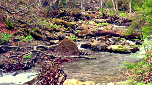 Autumn landscape of river with rapids flowing in mountain forest. Dry plants. Rocks in water stream video