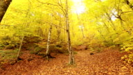 Autumn landscape video